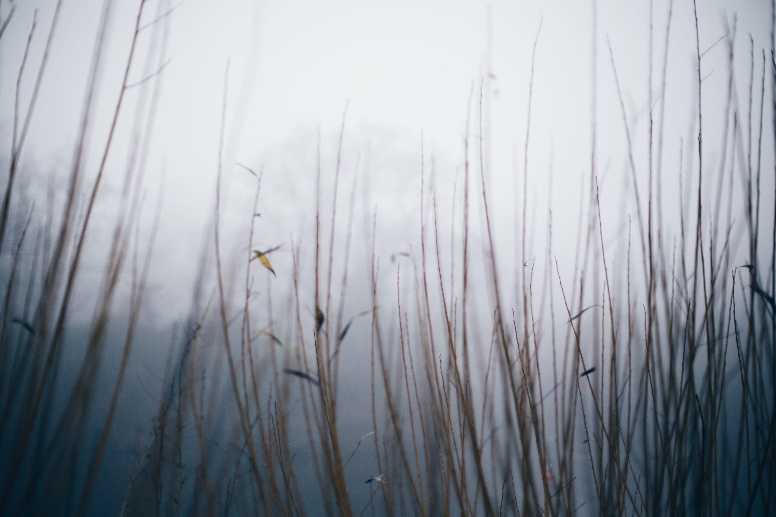 Crystal Palace mist
