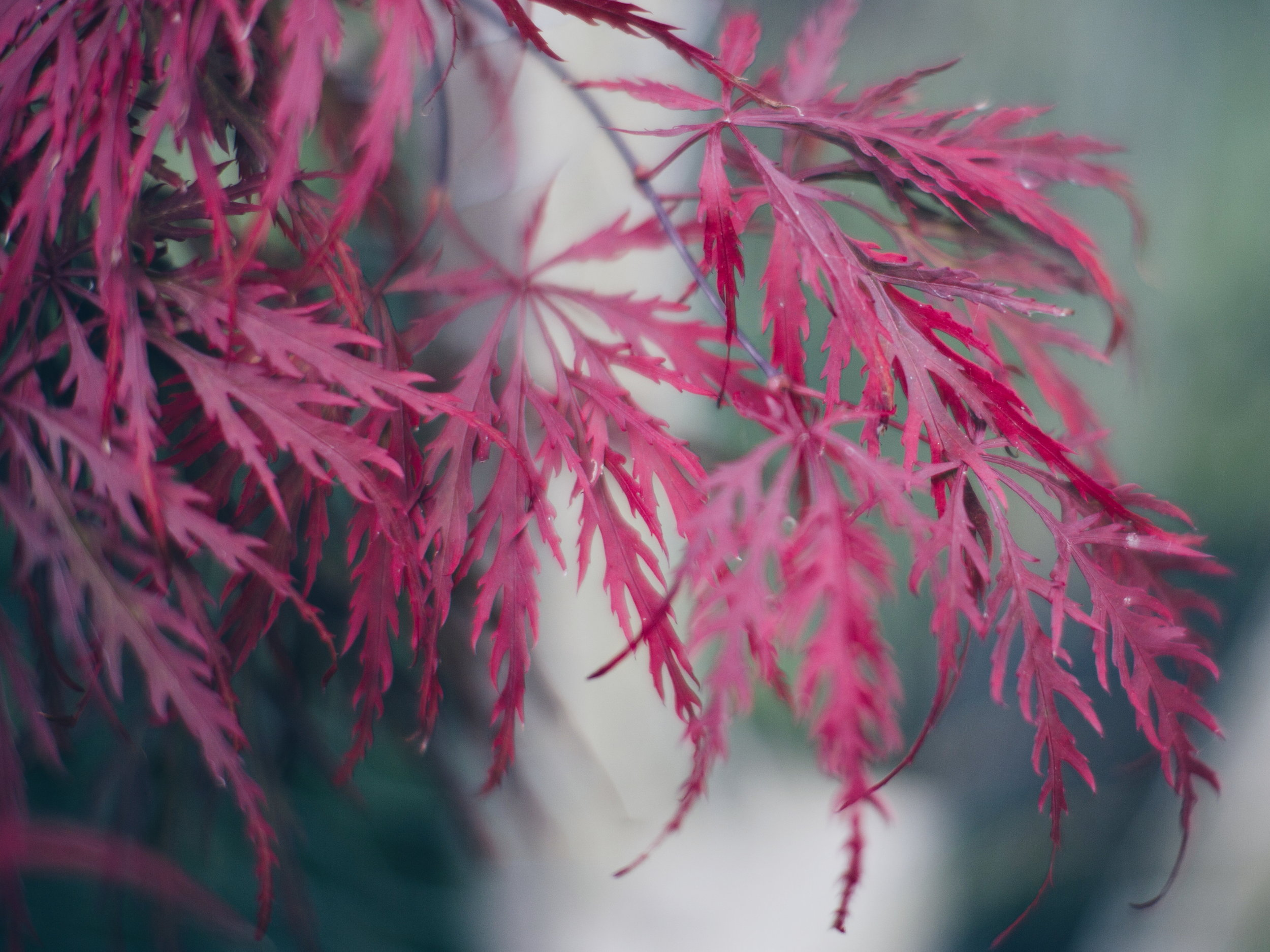 My acer