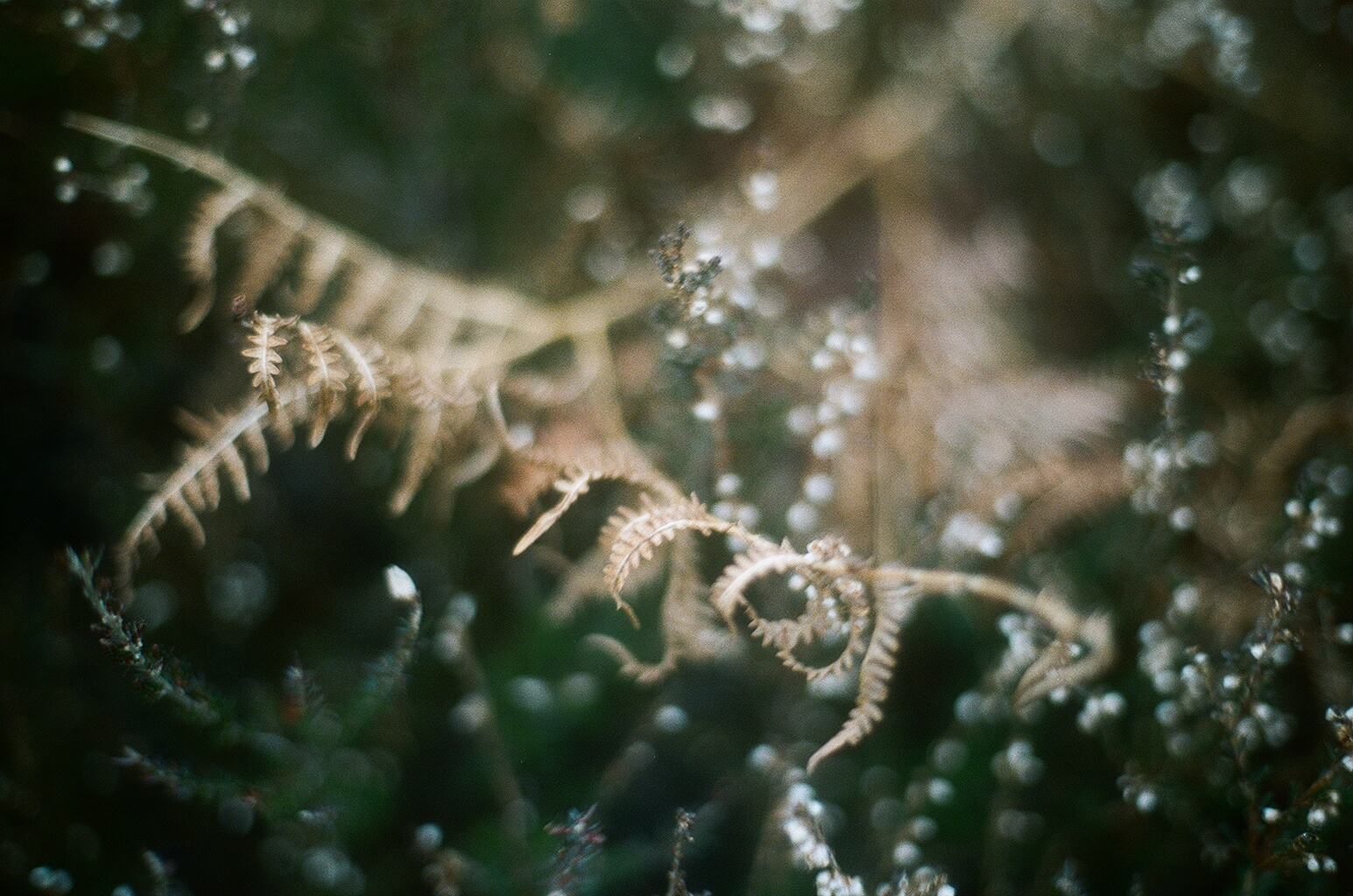 Ferns, Arran