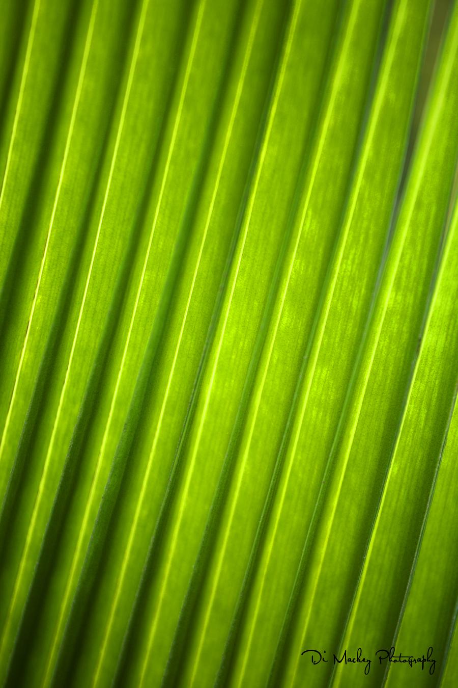 raro colours.jpg