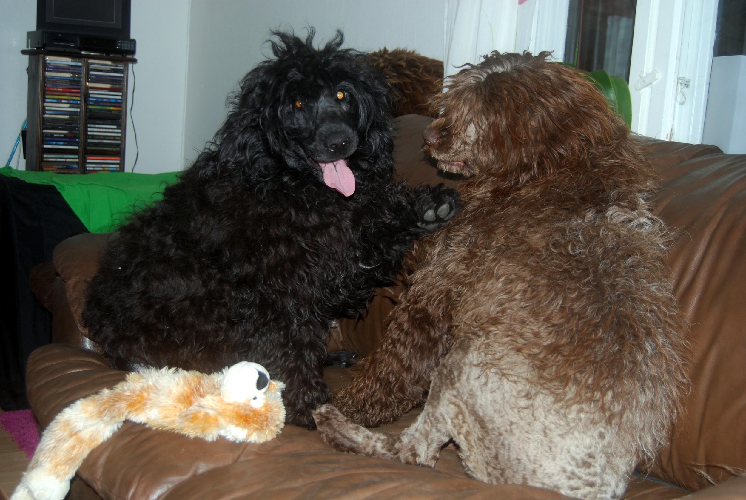 teddy og chilla.jpg