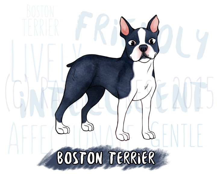 BostonTerrierSmall.jpg