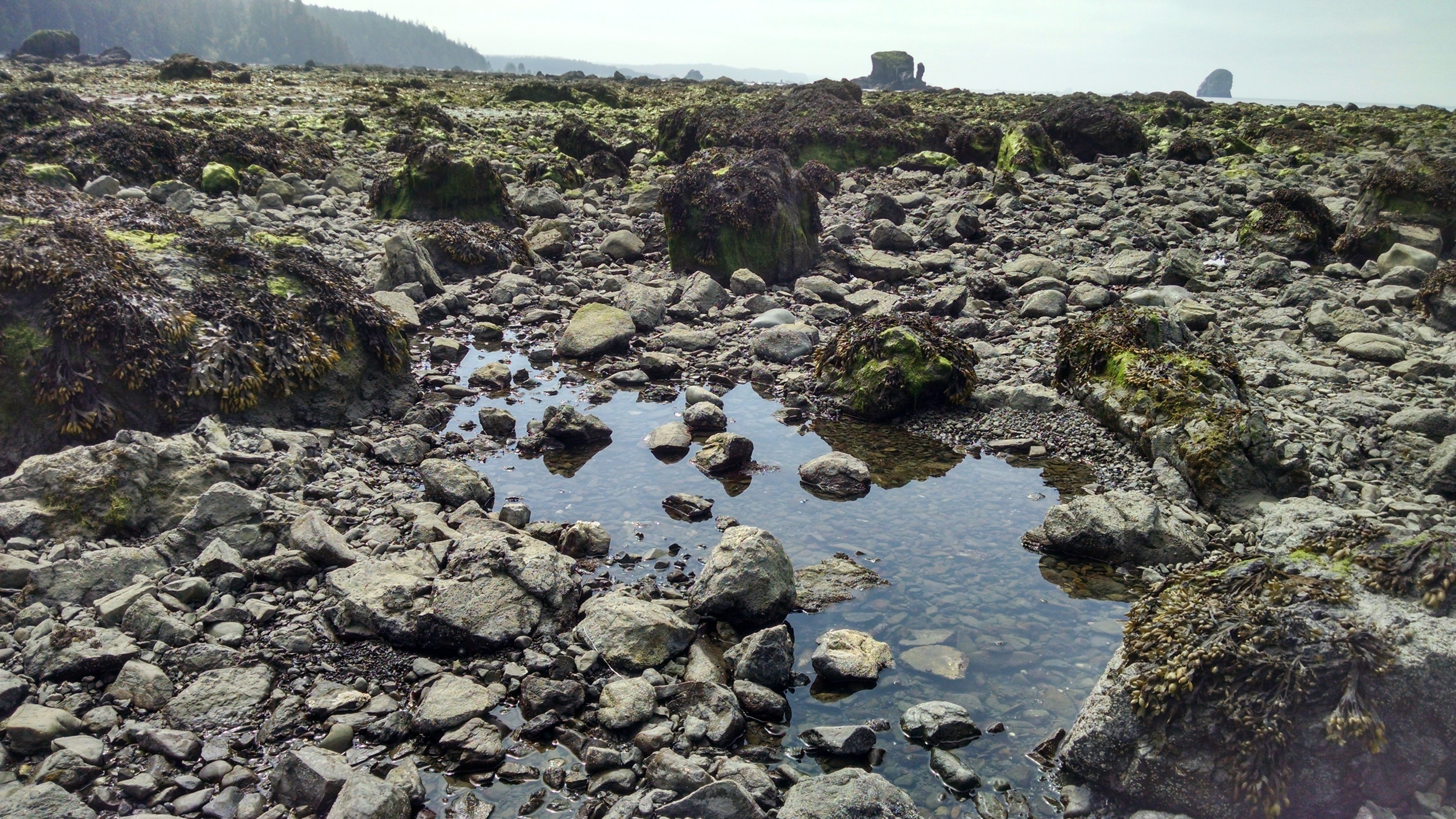 Amazing biodiversity and wildlife within tide pools