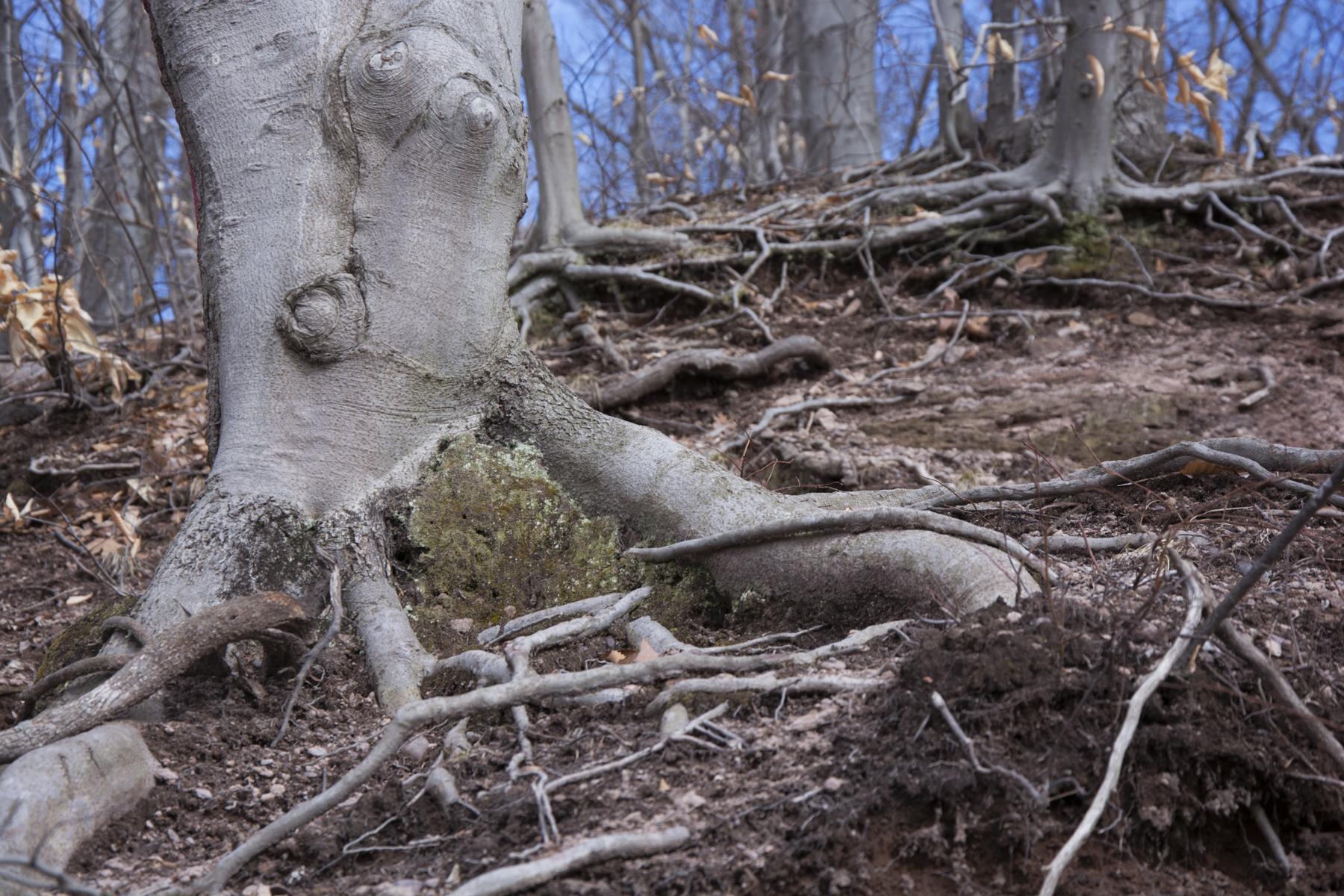 roots_E158373.jpg