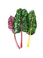 nutritionist-vancouver-wellness-holistic