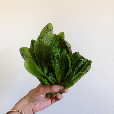 Spotted romaine, fresh from the garden!