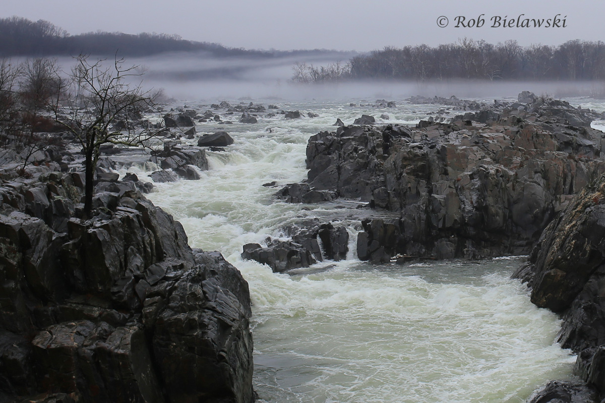 The beauty of Great Falls of the Potomac River on a seemingly dreary day!