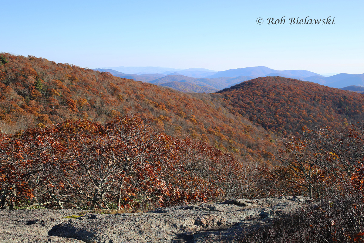 Looking north from Spy Rock after the 2.5 mile climb from Montebello's Country Store parking area. The leaves were a bit past peak but it was still a beautiful view!