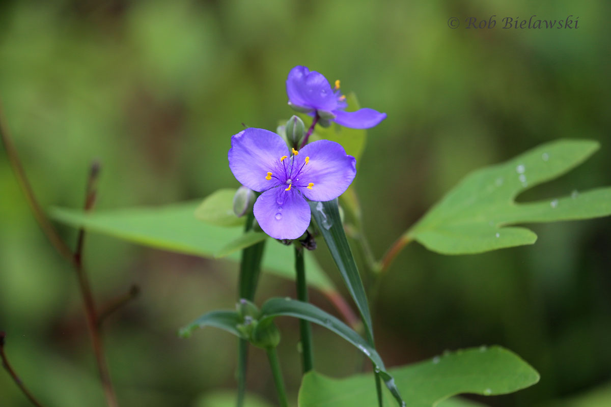 Beautiful flowers along the trail at Indiana Dunes State Park.