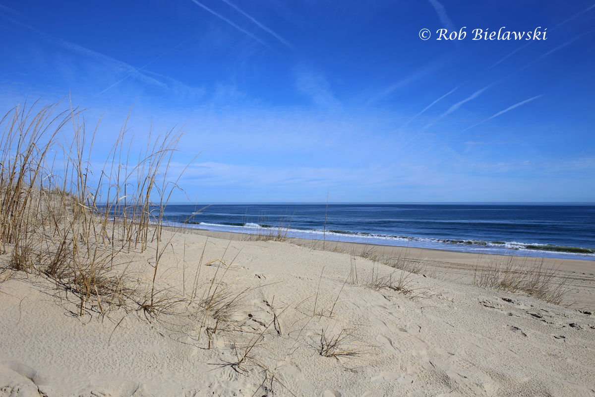 Beautiful day along the coastline at Back Bay NWR in Virginia Beach.
