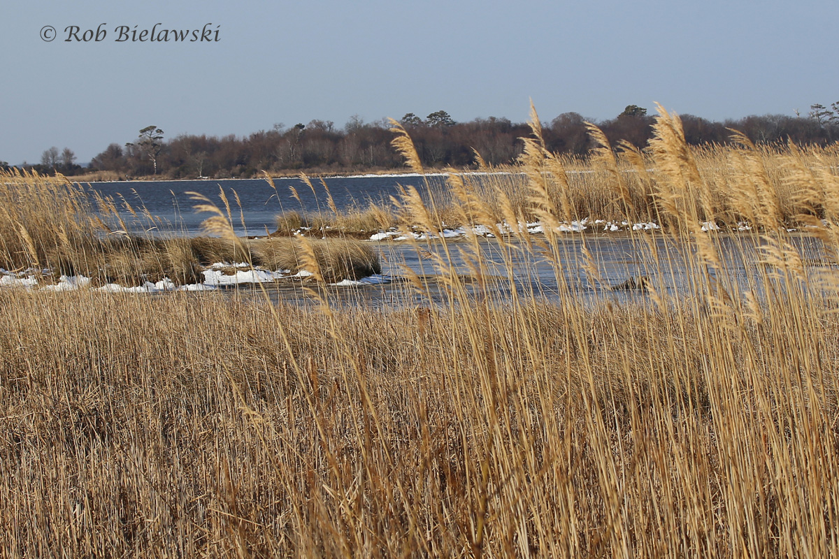 Small amounts of snow remain around the marshes at Back Bay, though the winds have kept the waterway fully open this weekend.
