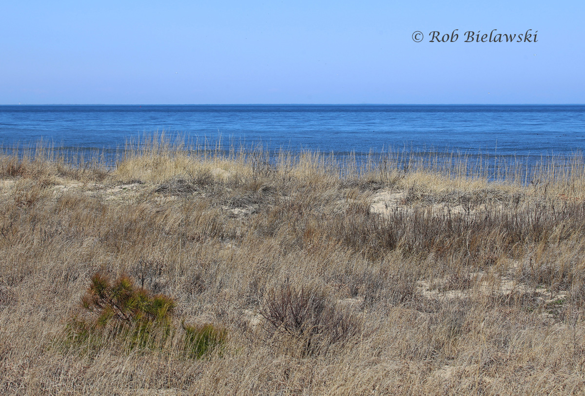 Completely sunny skies and temperatures near 60 degrees F made for beautiful views over the coastline on Sunday!
