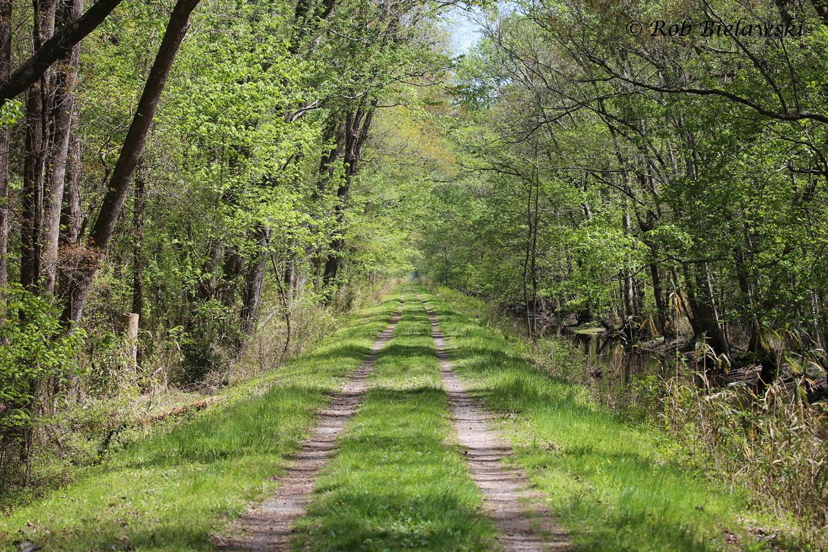 Washington Ditch Trail (4/12/15)