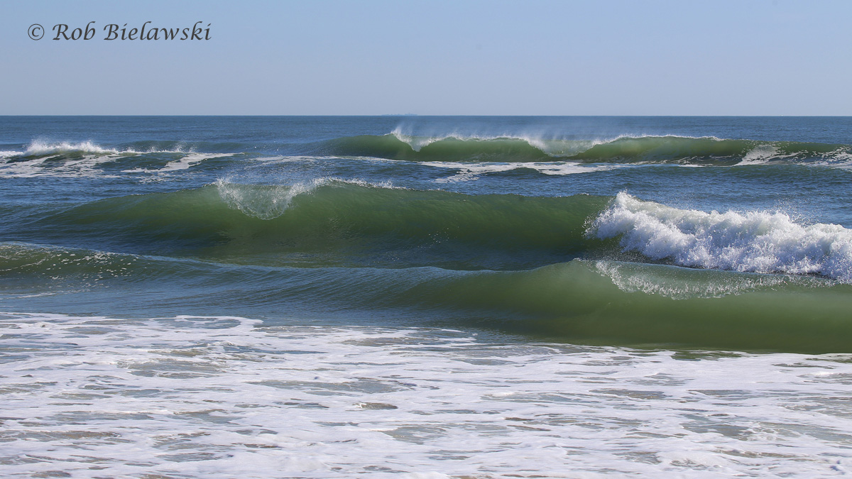 The waves were crashing onto the shoreline of Back Bay NWR on Sunday morning after a few days of strong northeasterly winds passed over the region!