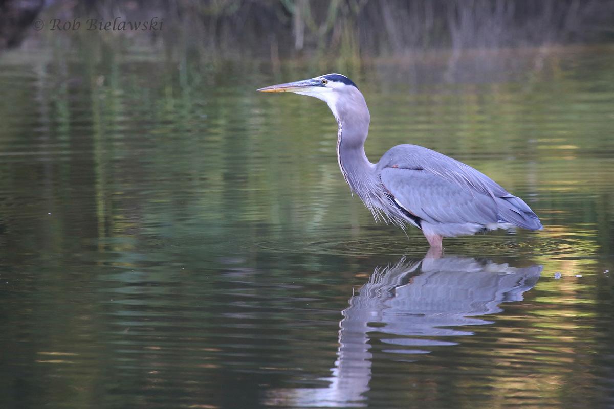 Swallowing Fish Whole - 11 Oct 2015 - Kings Grant Lakes, Virginia Beach, VA