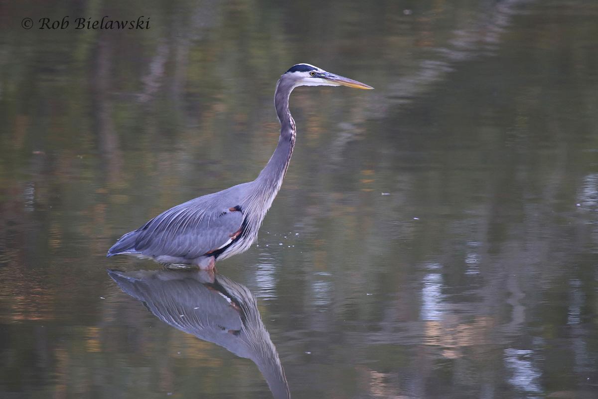 11 Oct 2015 - Kings Grant Lakes, Virginia Beach, VA