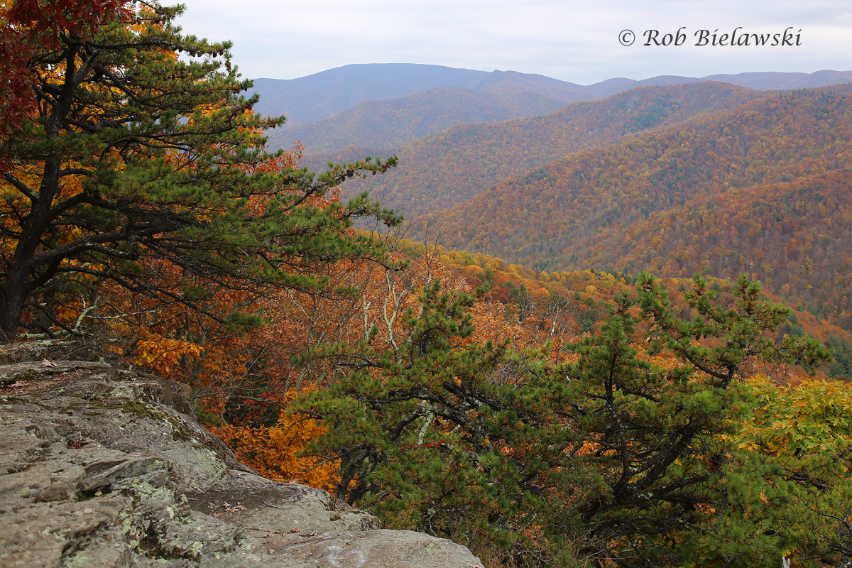 Fall foliage was quite breathtaking at Twenty Minute Cliff in Nelson County!