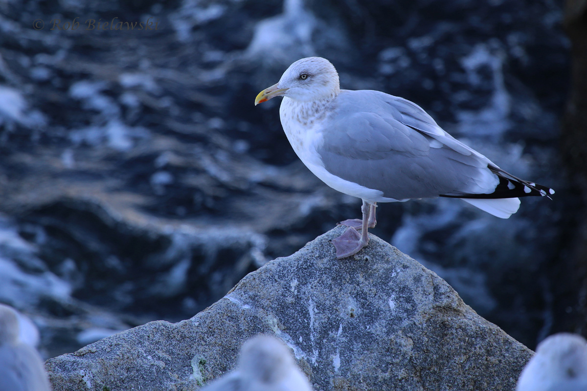 4 Dec 2015 - South Thimble Island, Virginia Beach, VA