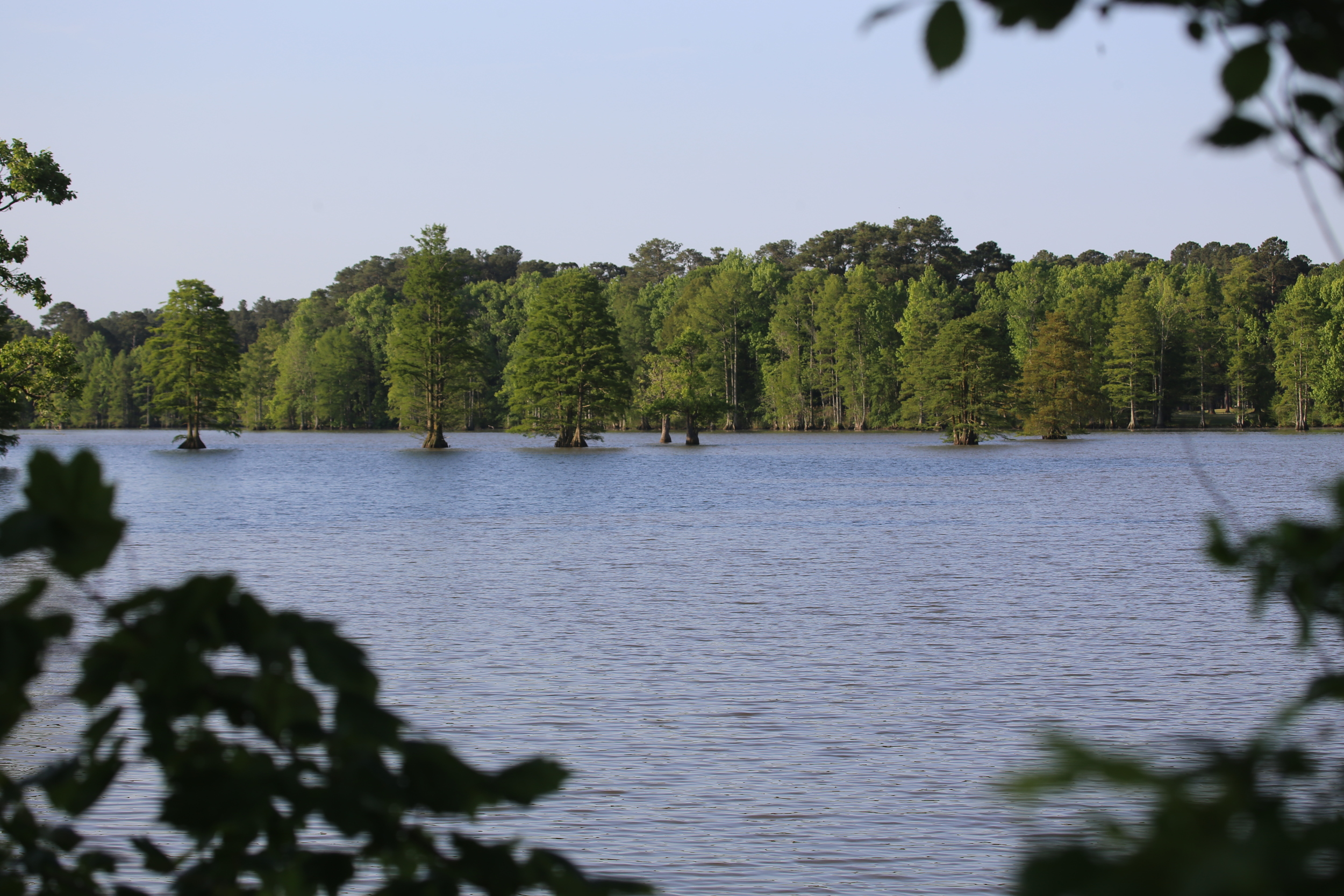 Lake & Cypress