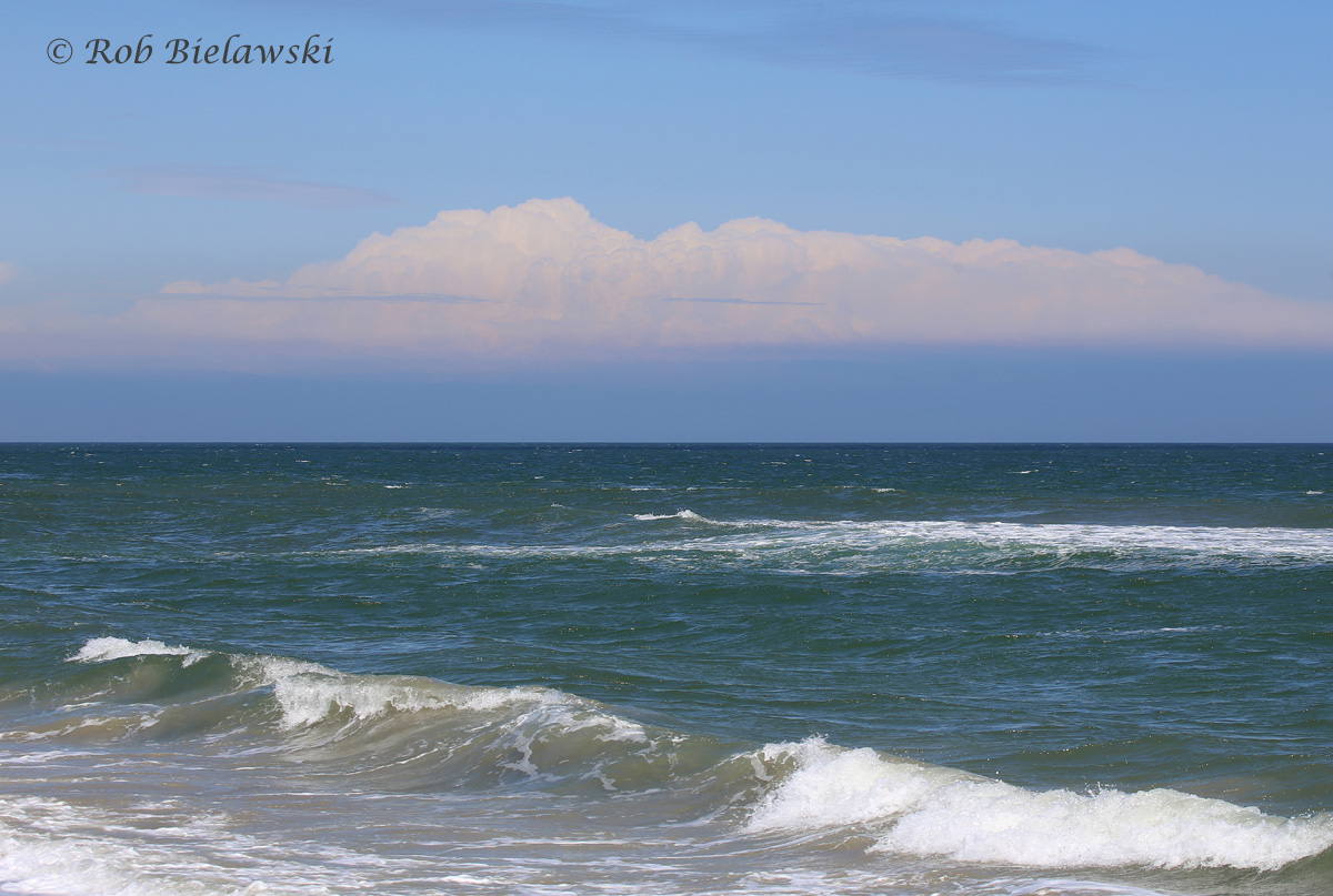 Atlantic Ocean / 23 Apr 2016 / Back Bay NWR