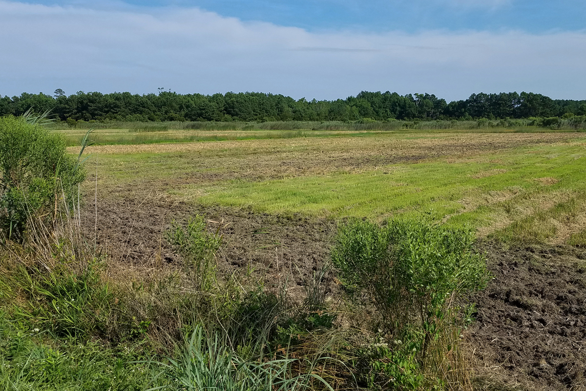 Middle Southern Cell / 18 Jul / Princess Anne WMA Whitehurst Tract