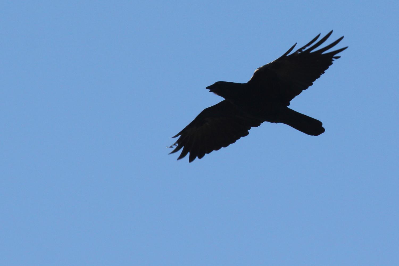 Fish Crow / 2 Feb / Pleasure House Point NA