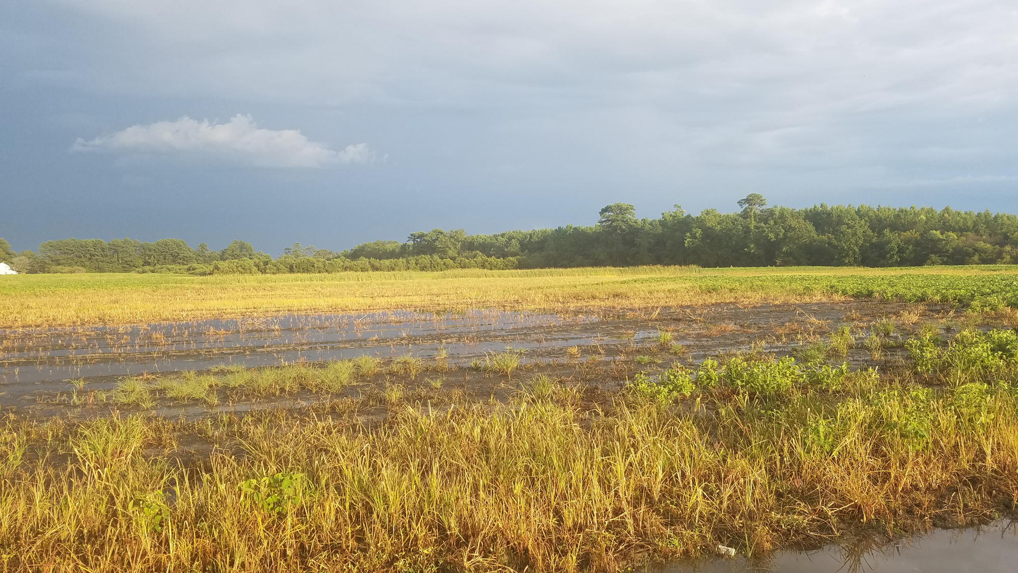 Flooded Field / 7 Aug / Shipps Cabin Rd.