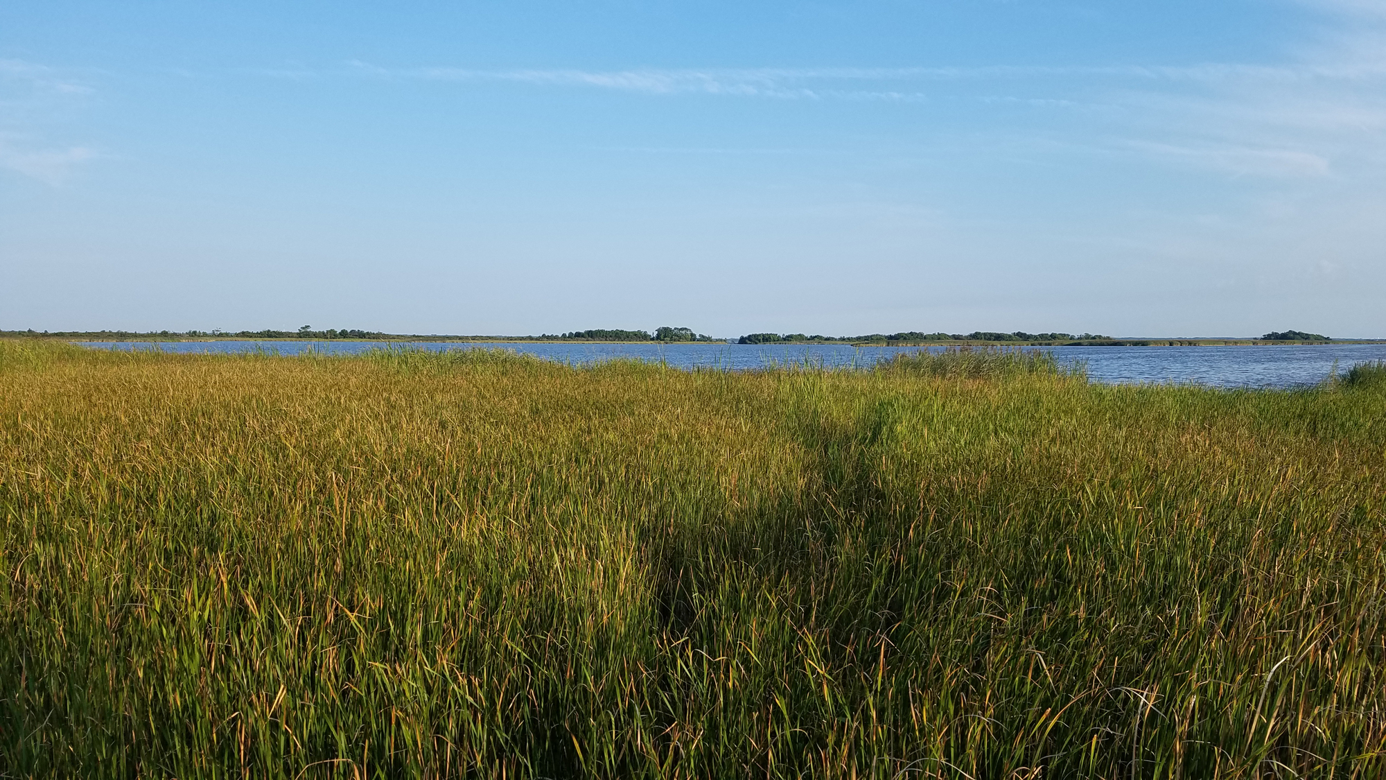Back Bay freshwater marsh / 10 Aug / Back Bay NWR
