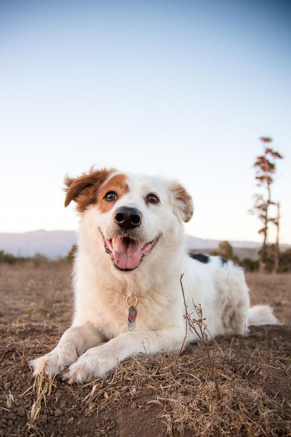 pet-photographer-santa-barbara-baxter-4