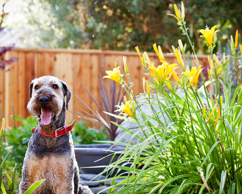 Sun was shining, flowers were blooming, and Luke was as happy as could be.