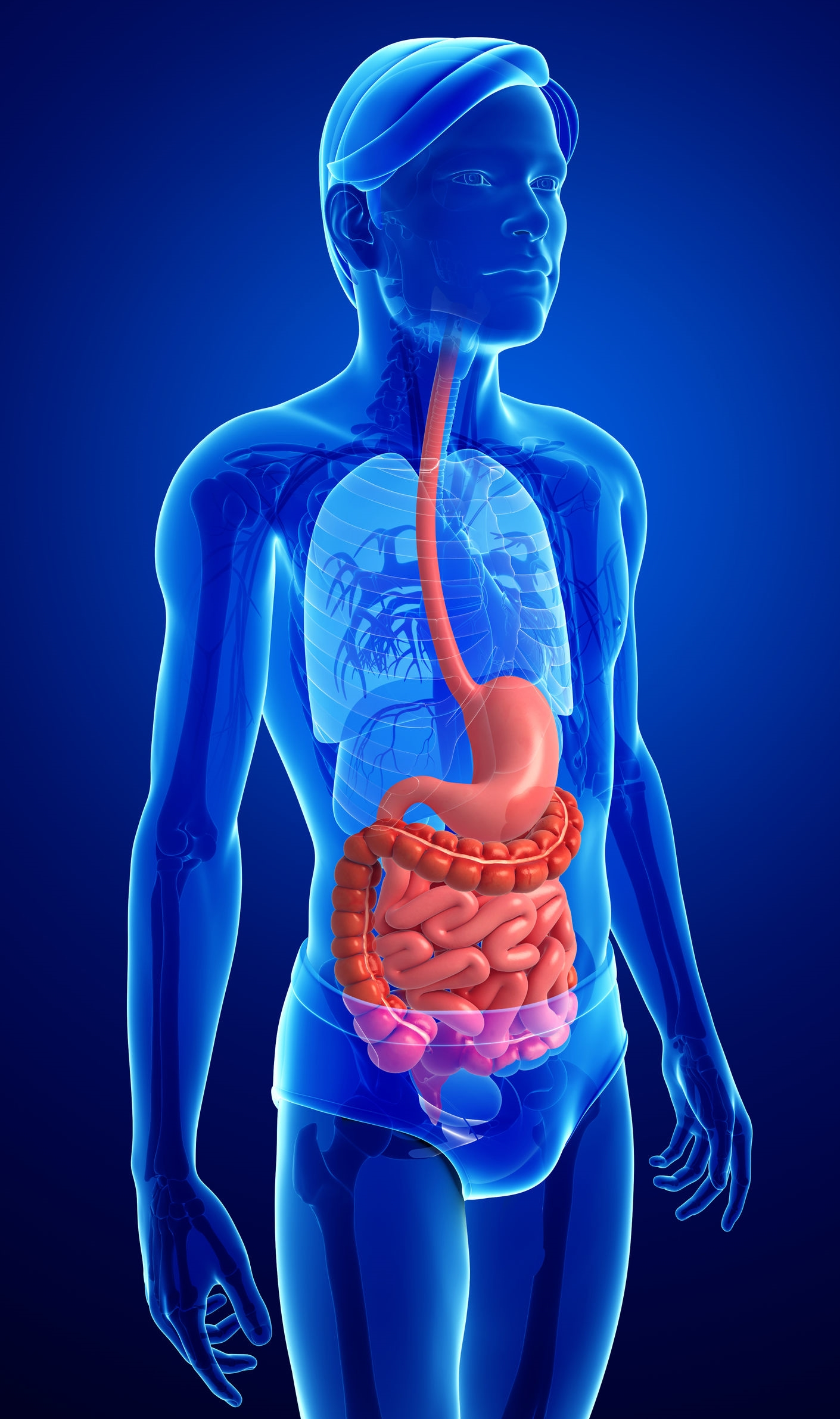 The Digestive System,  Photo: 123rf.com - pixdesign123