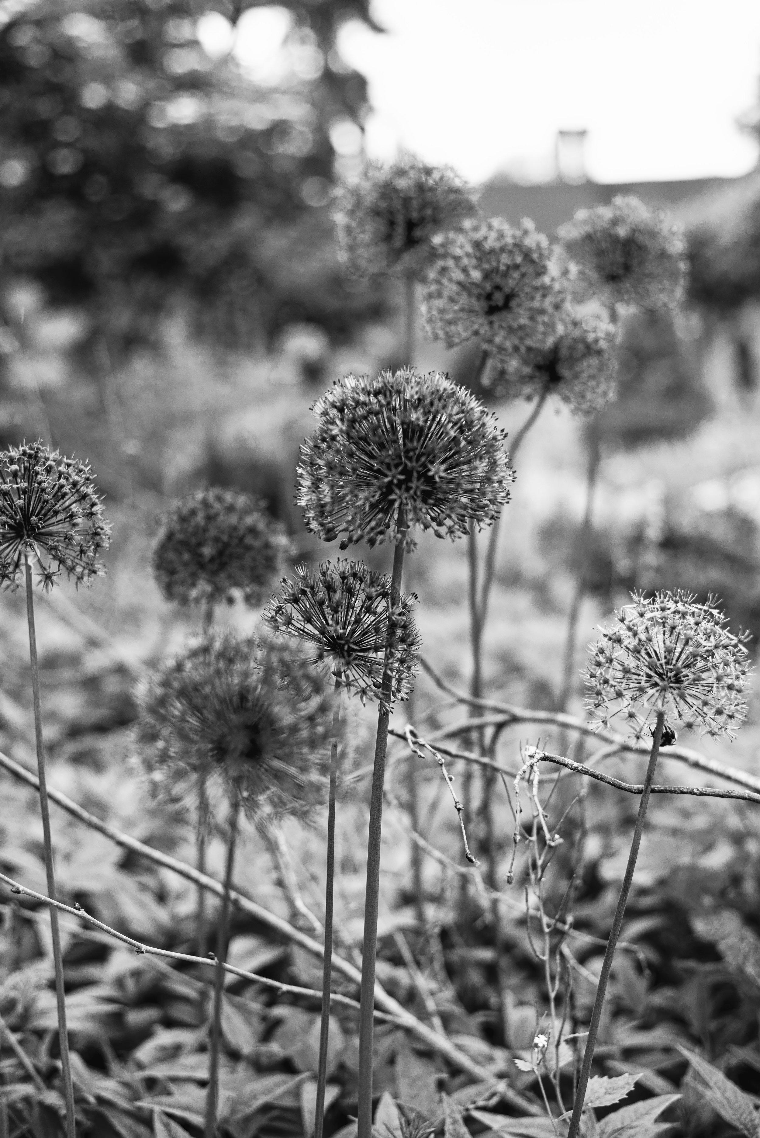 Gardens - Clifford Darby 2019