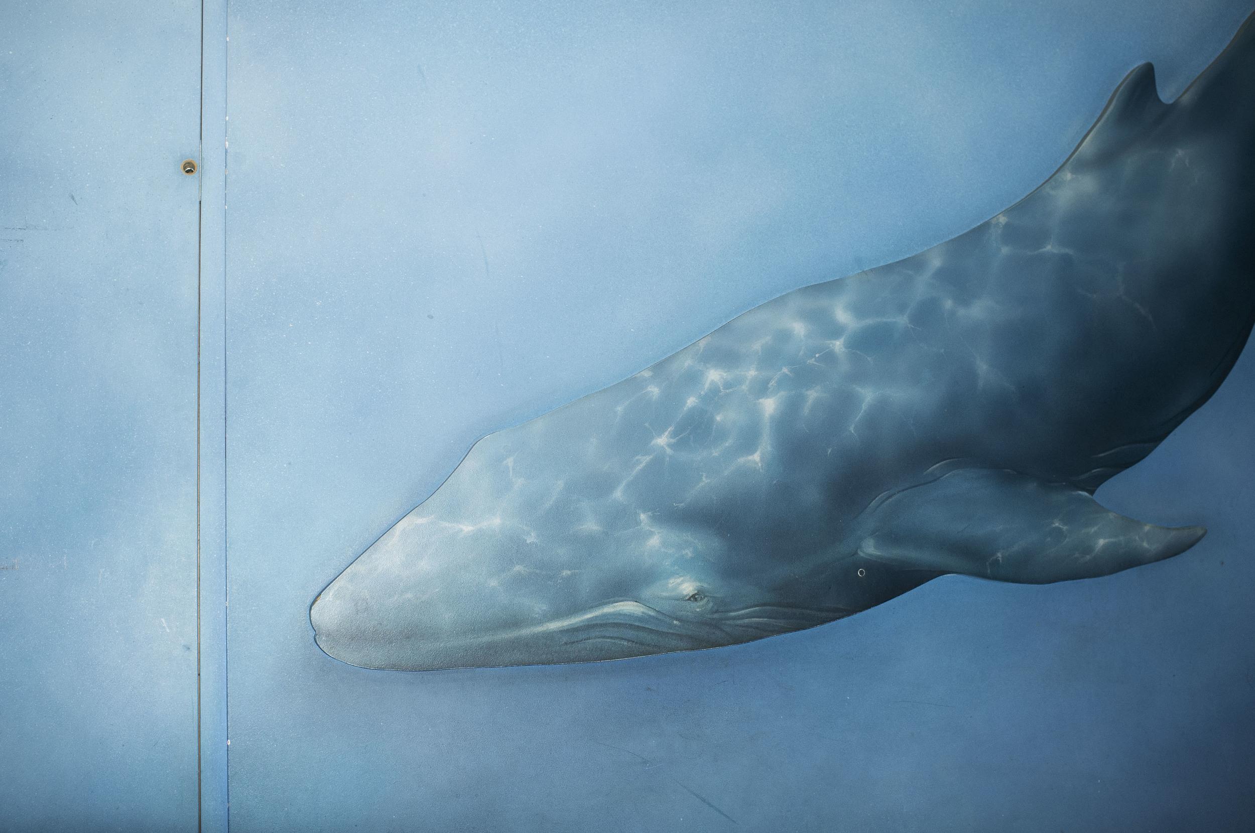 Whale light_DSCF3905_PRINT.jpg