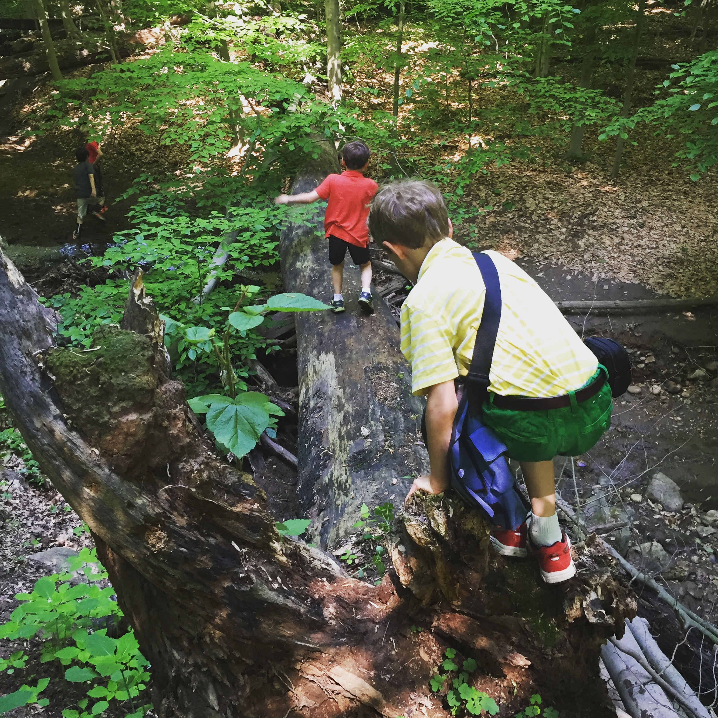 the boys crossing a fallen log (do y'all love how Jack chose to wear a belt for this hike? bless his heart.