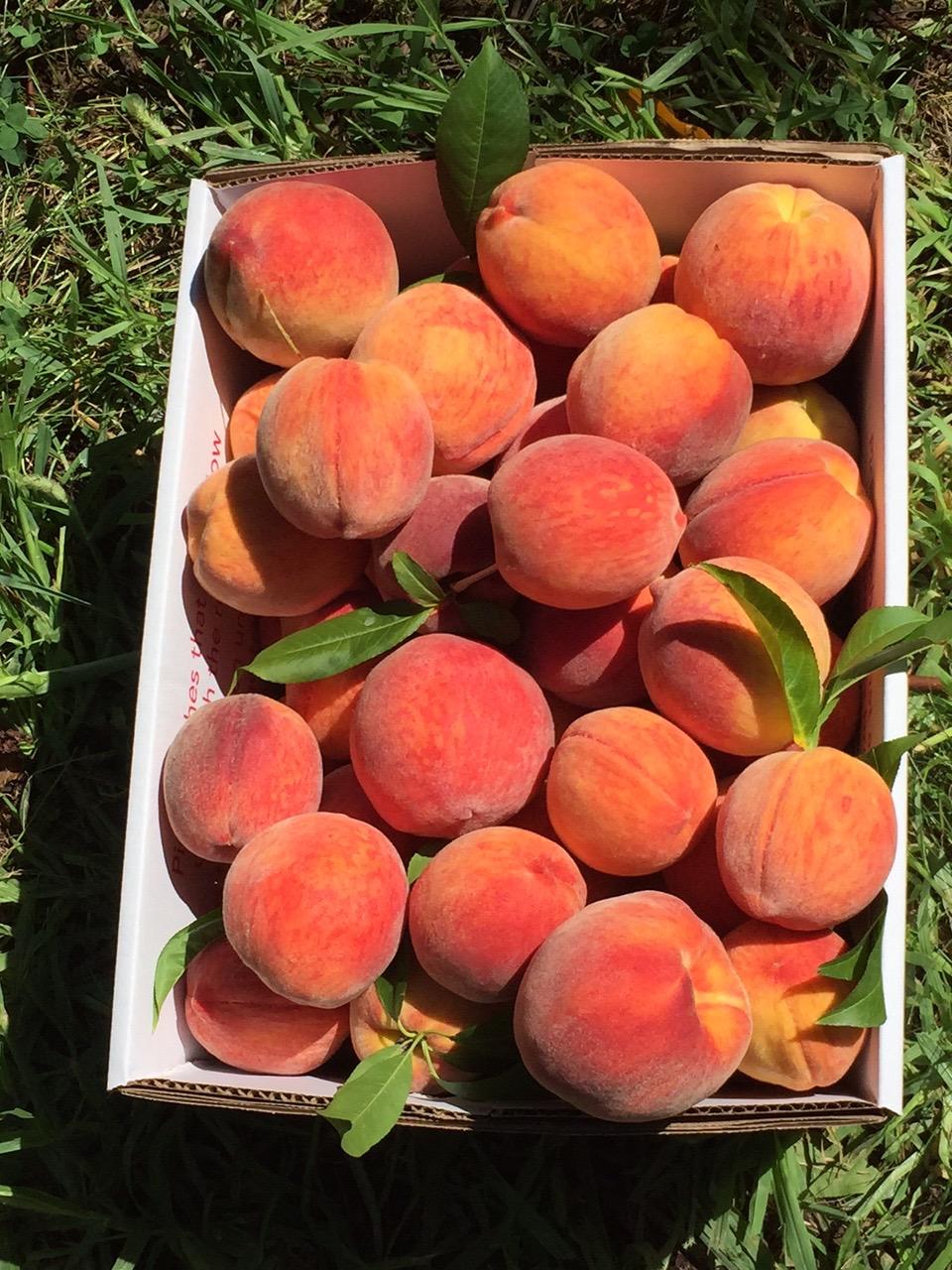 Peaches! #nofilter