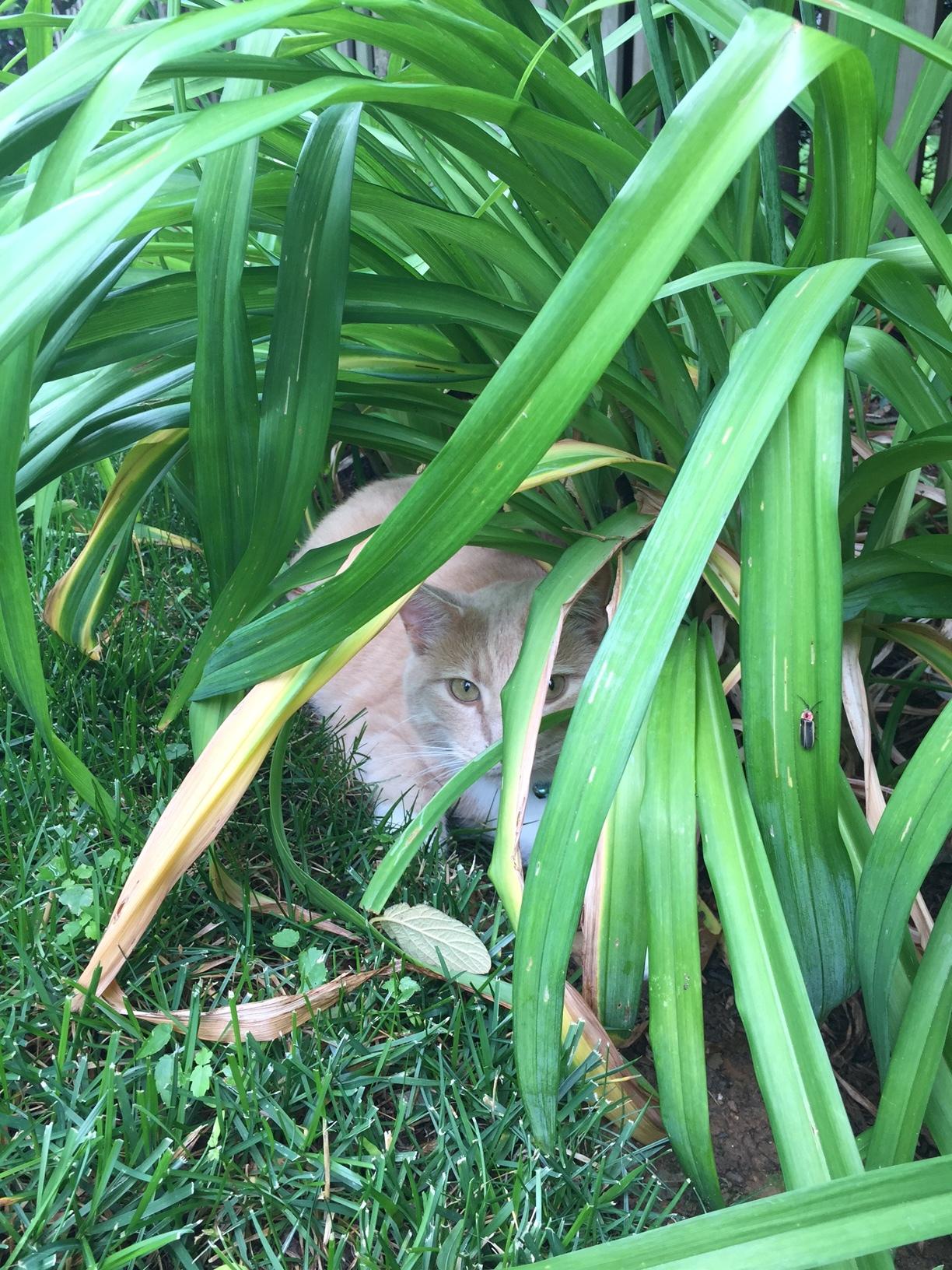 He thinks he's totally hidden