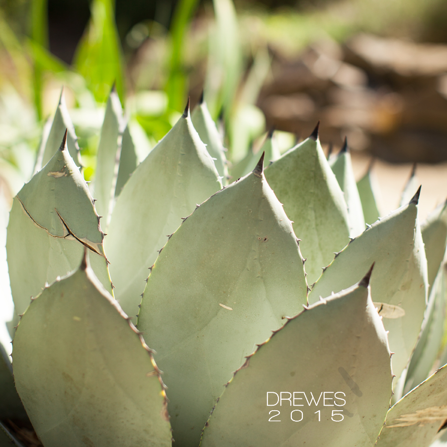 Succulent_MG_0133.jpg