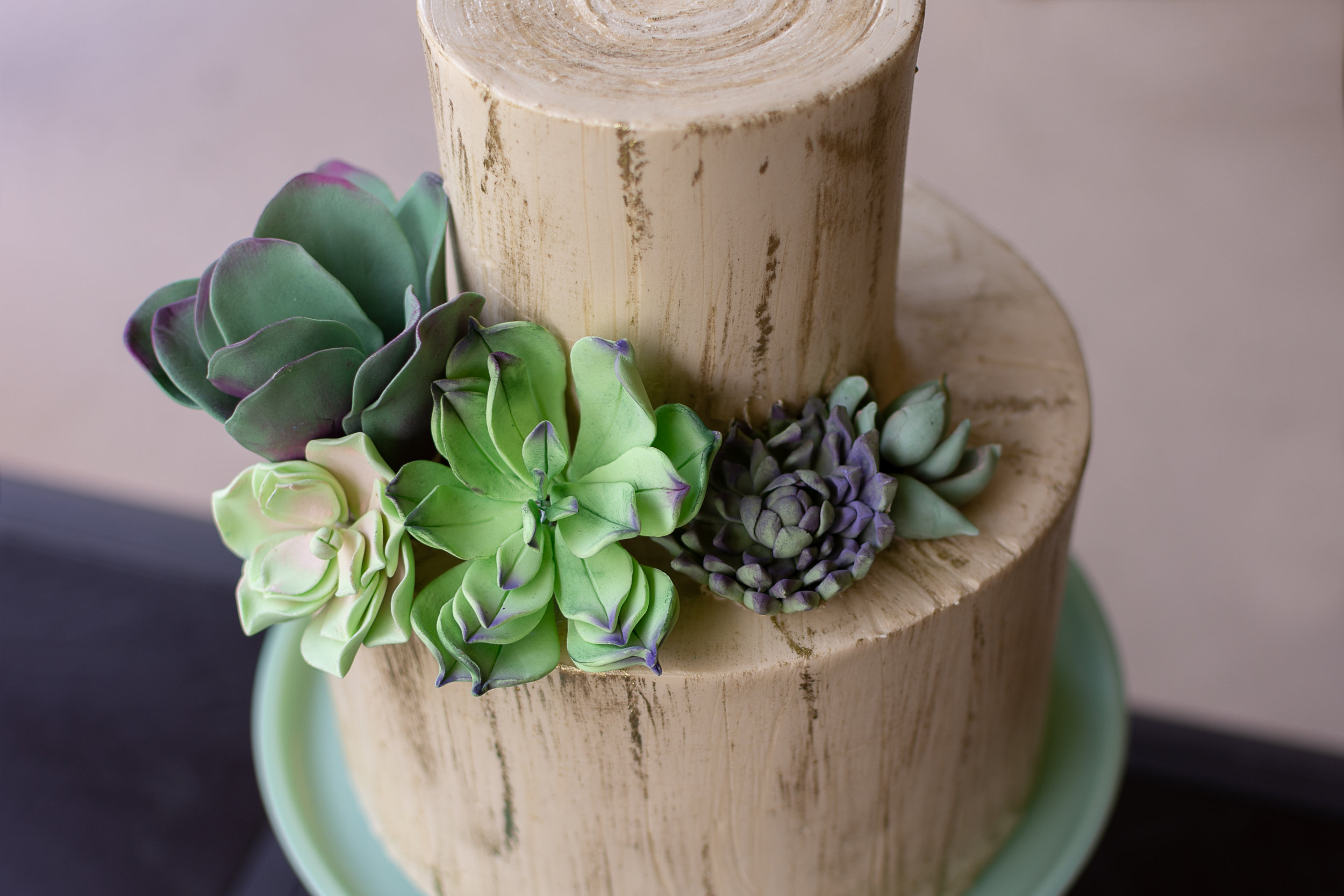 Birch Cake with Succulents