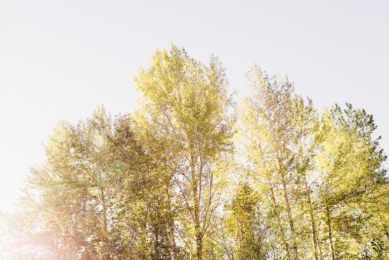 yellowbarnatbuckleyweddingphotosbylovesongphoto-0031.jpg