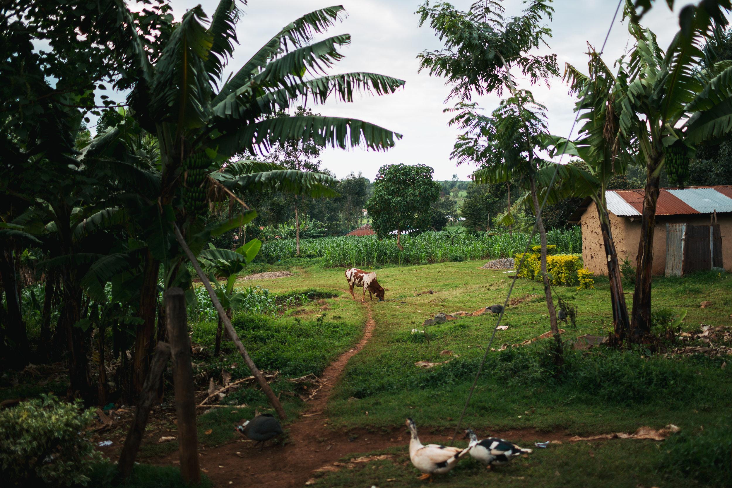 arrive-kenya-kristawelchcreative-00044.jpg