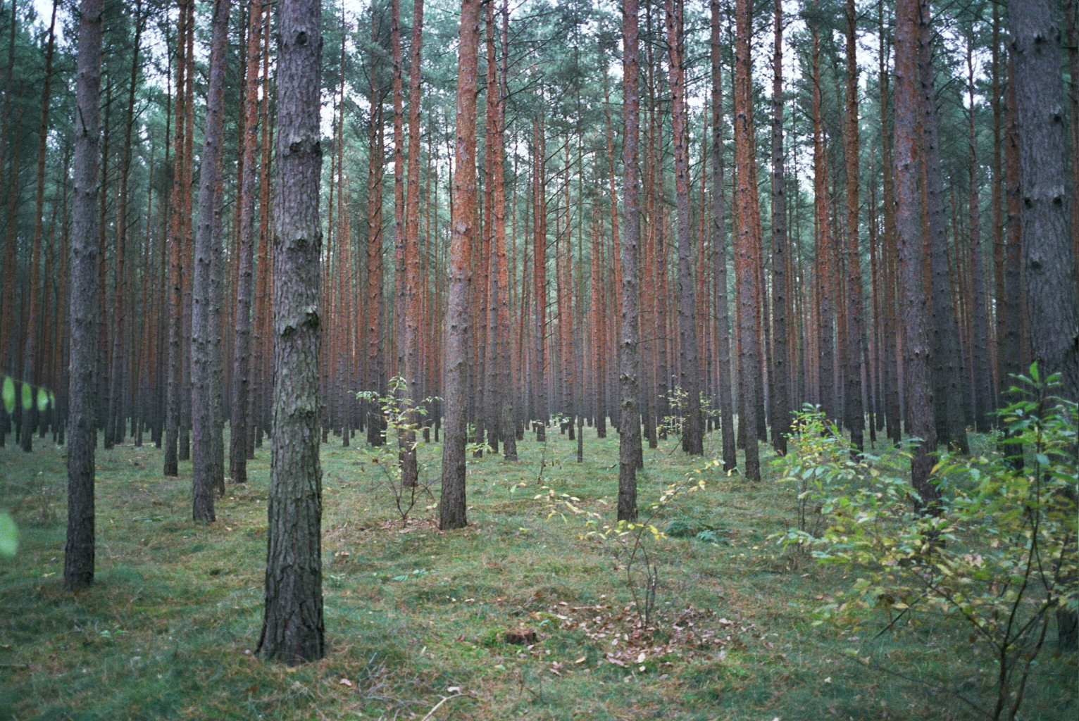 35mm_Hannover_Forest_a2_east_germany_exit.jpg