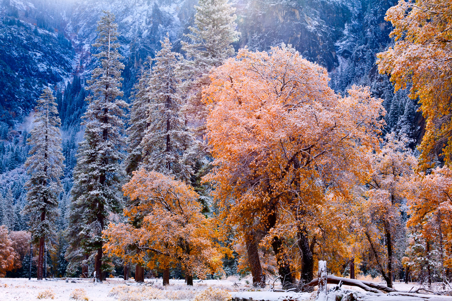 Early snowfall in Yosemite National Park in California, USA.