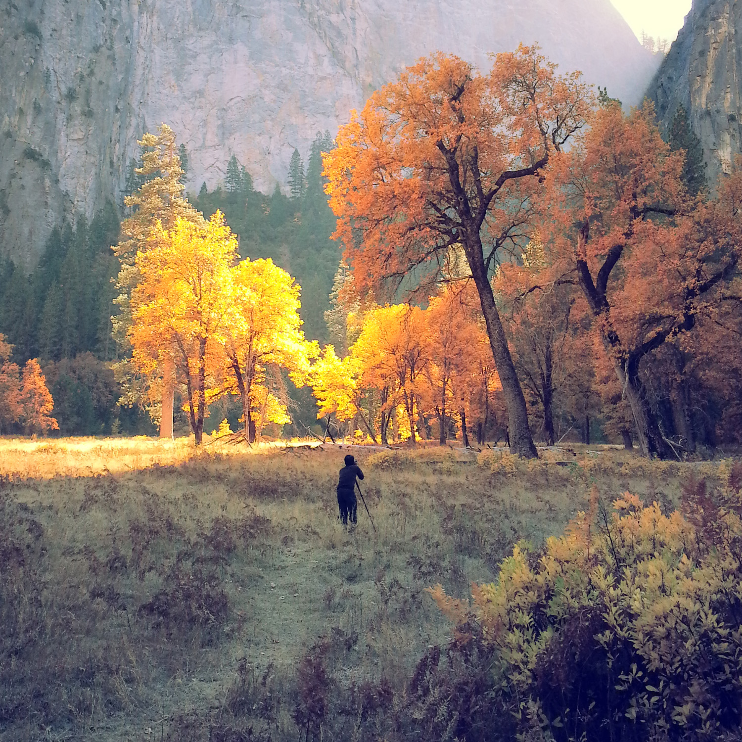 Yosemite National Park. Image taken by Michelle Wong.