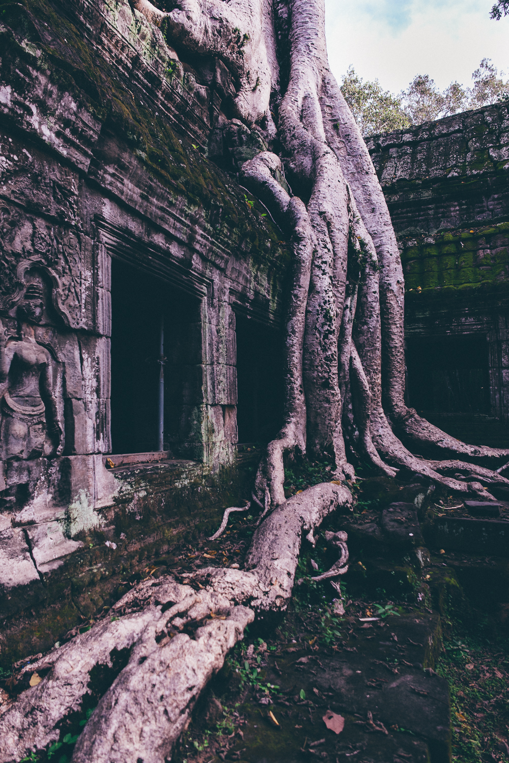 Nature takes over at Ta Prohm