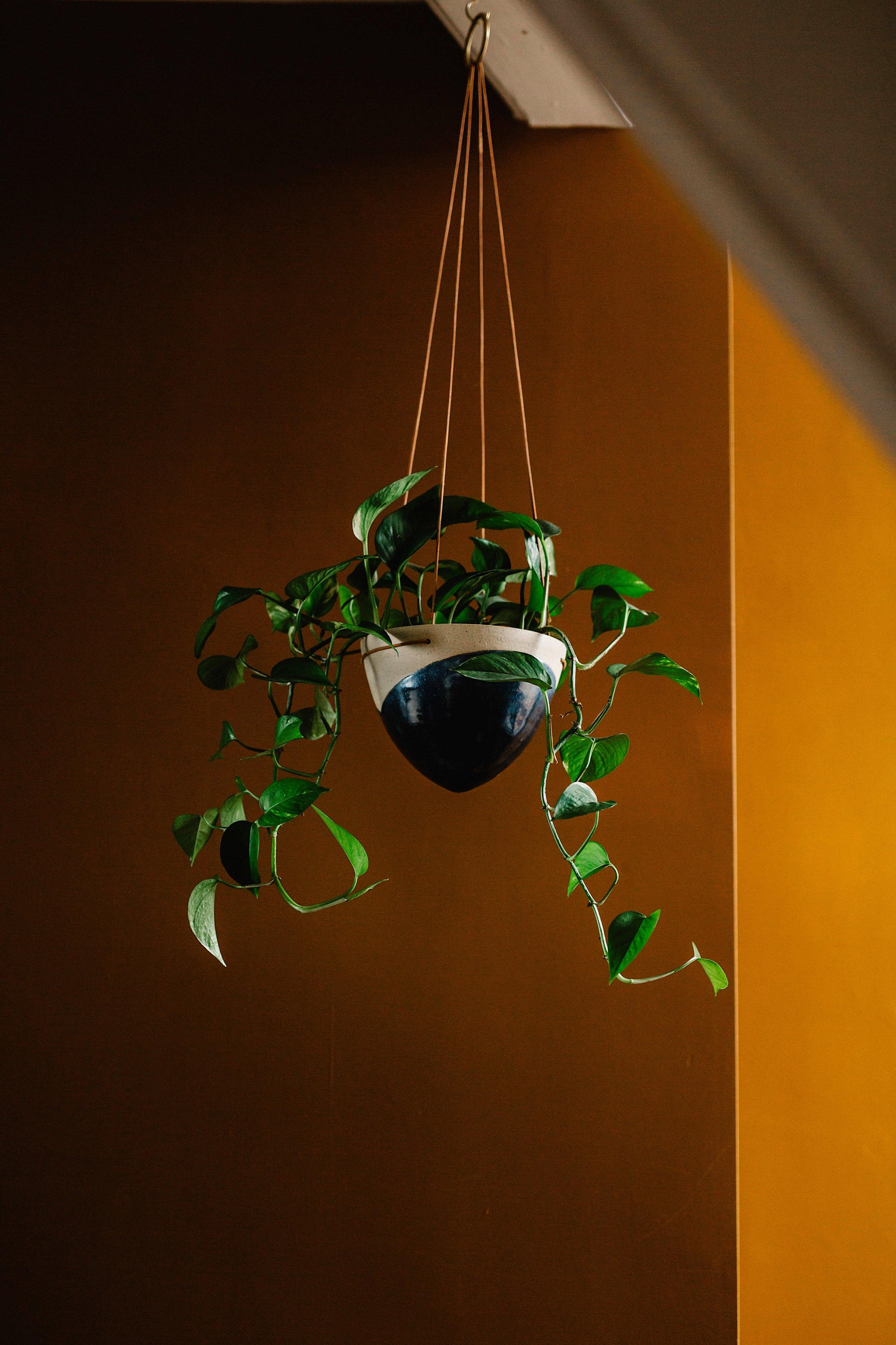 Drop Pots -