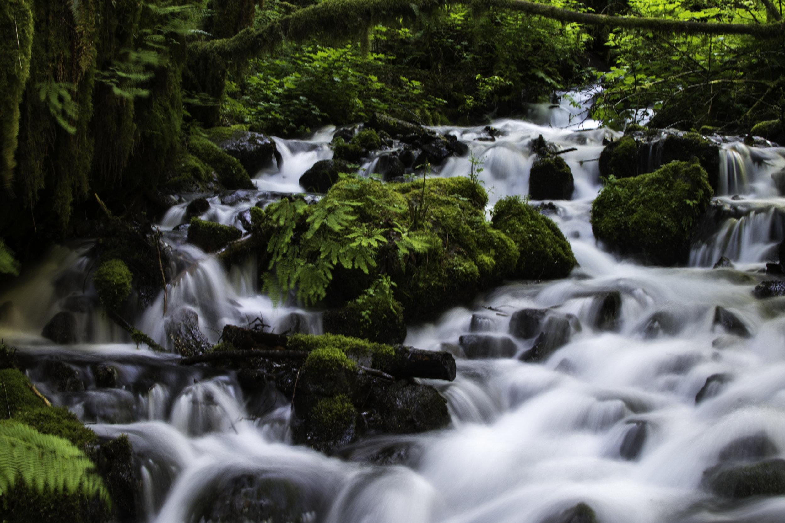 multnomah falls -