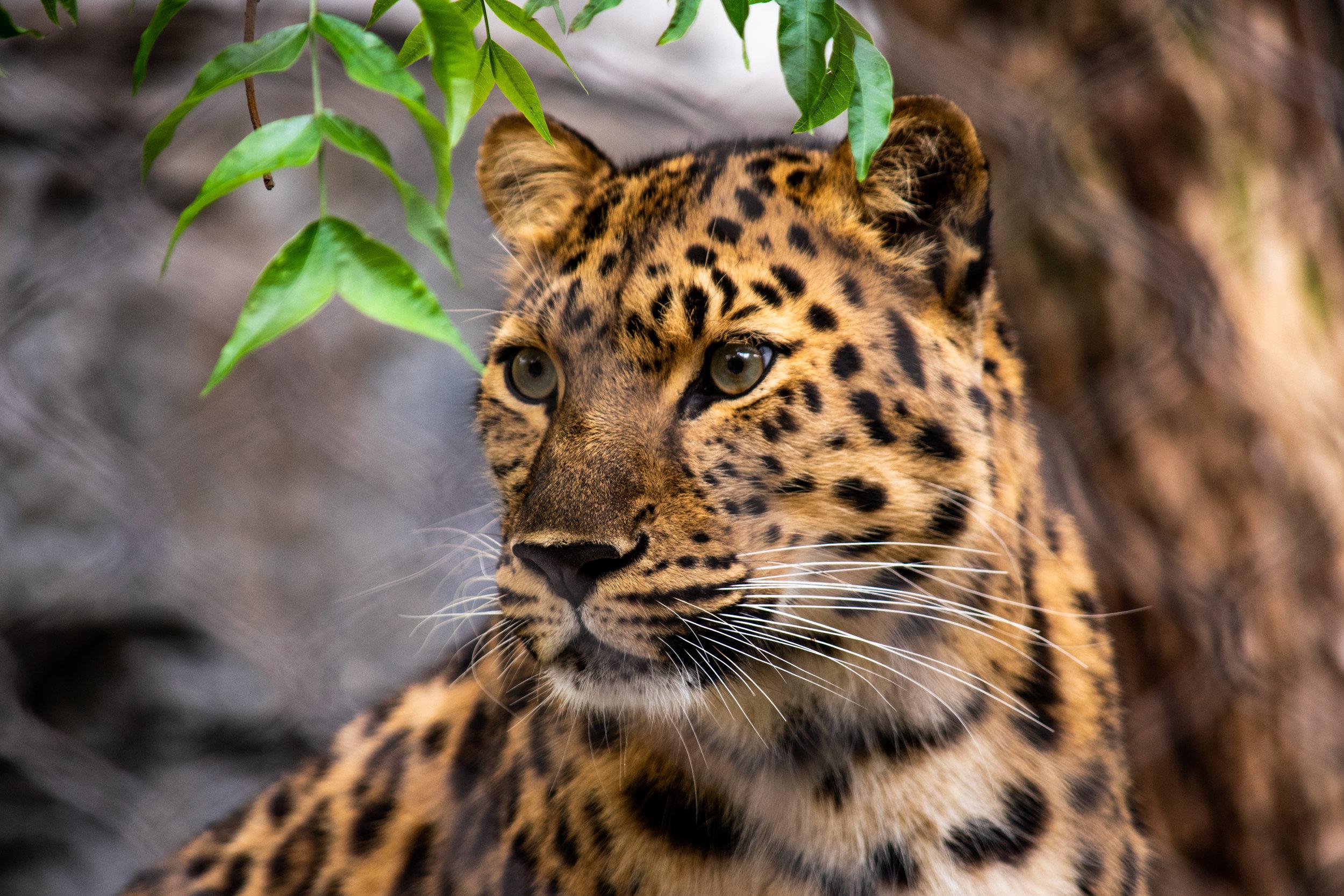 zoo 57.jpg