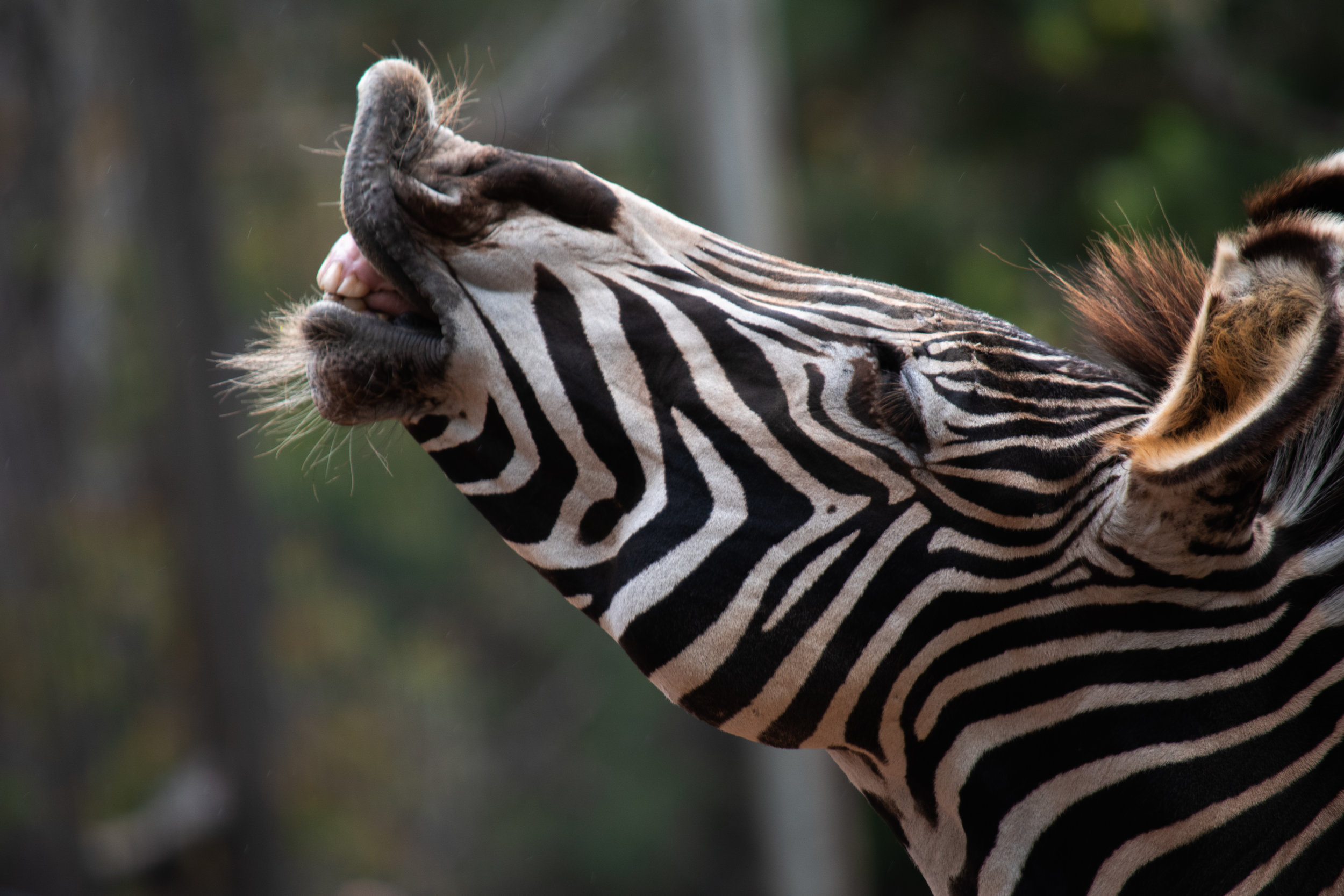 zoo 54.jpg