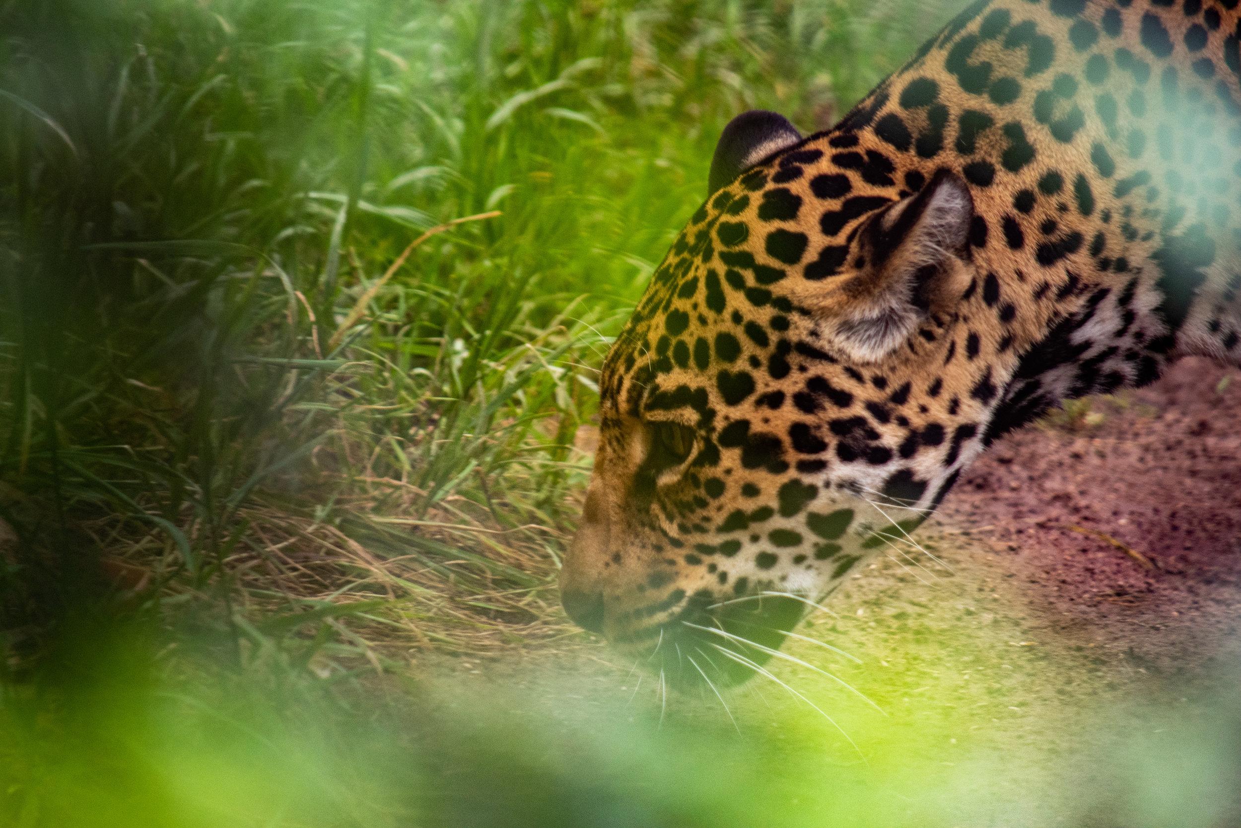 zoo 36.jpg