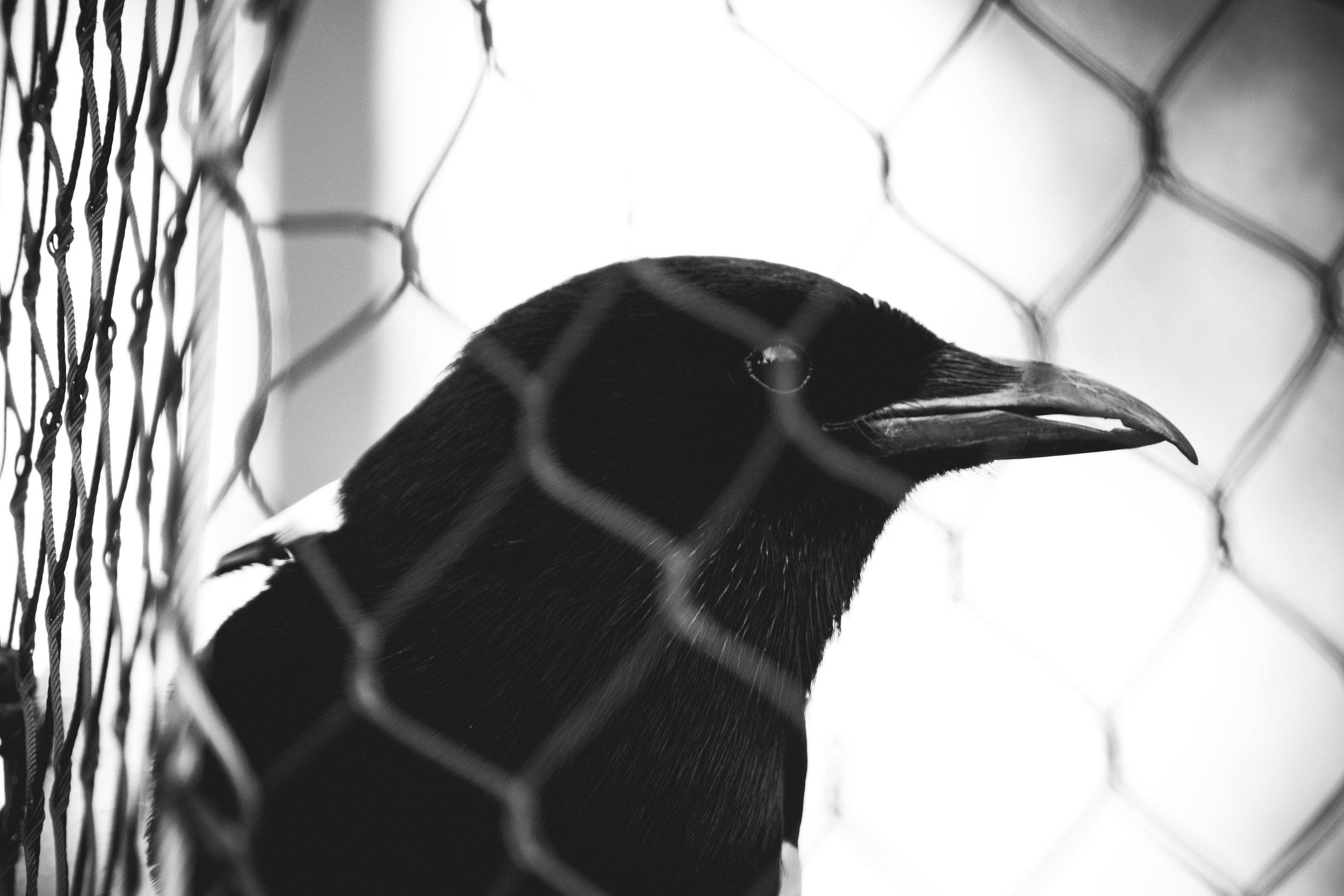 zoo 31.jpg